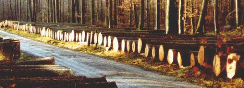 parkett_wood